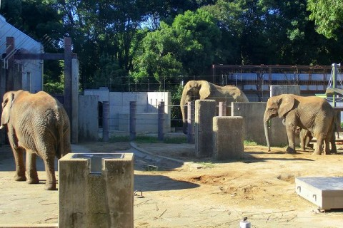 06 ゾウのファミリー